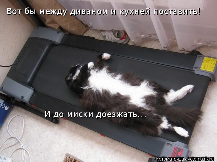 Котоматрица: Вот бы между диваном и кухней поставить! И до миски доезжать...