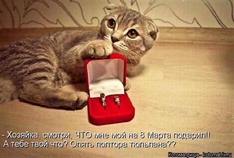 Котоматрица: - Хозяйка, смотри, ЧТО мне мой на 8 Марта подарил!!  А тебе твой что? Опять полтора тюльпана??