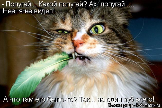 Котоматрица: - Попугай... Какой попугай? Ах, попугай!.... А что там его было-то? Так... на один зуб всего!  Нее, я не видел!
