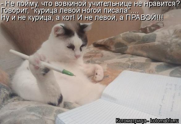 """Котоматрица: - Не пойму, что вовкиной учительнице не нравится? Говорит, """"курица левой ногой писала"""".... Ну и не курица, а кот! И не левой, а ПРАВОЙ!!!"""