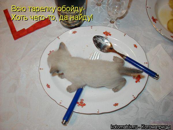 Котоматрица: Всю тарелку обойду- Хоть чего-то, да найду!