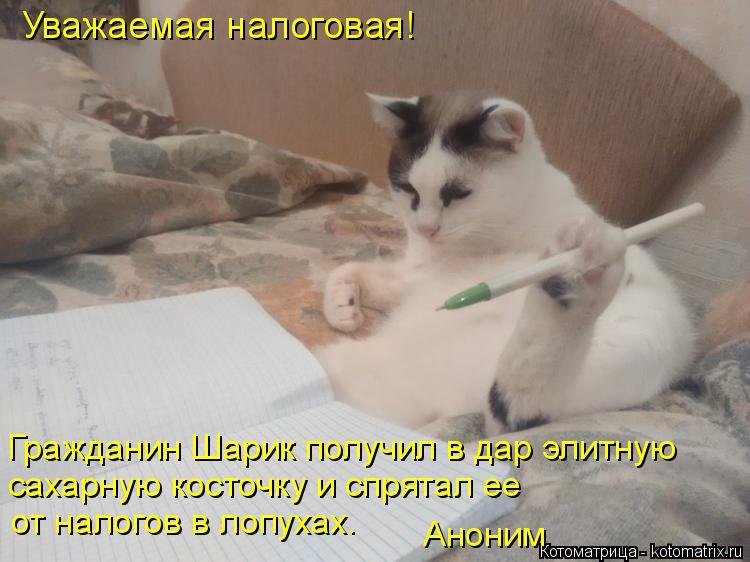 Котоматрица: Уважаемая налоговая! Гражданин Шарик получил в дар элитную сахарную косточку и спрятал ее  от налогов в лопухах. Аноним