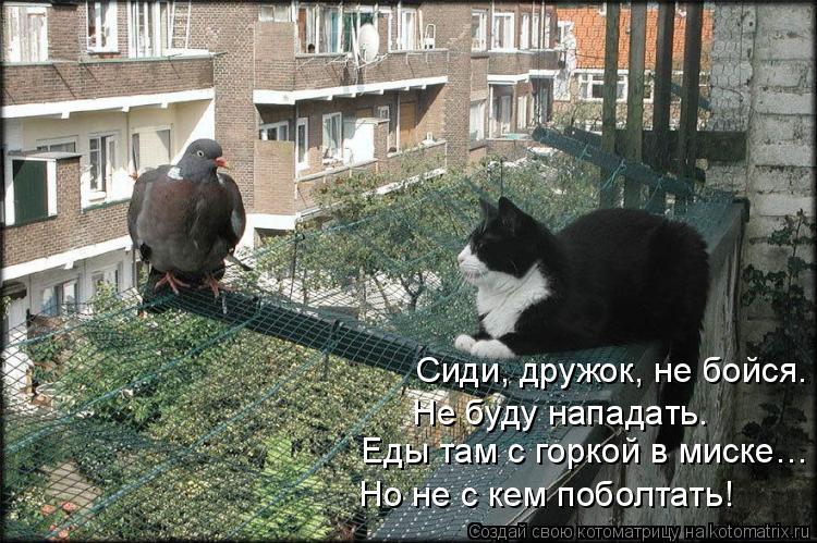Котоматрица: Сиди, дружок, не бойся. Не буду нападать.  Еды там с горкой в миске… Но не с кем поболтать!