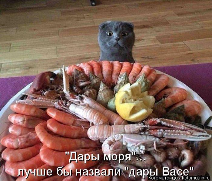 "Котоматрица: ""Дары моря""... лучше бы назвали ""дары Васе"""