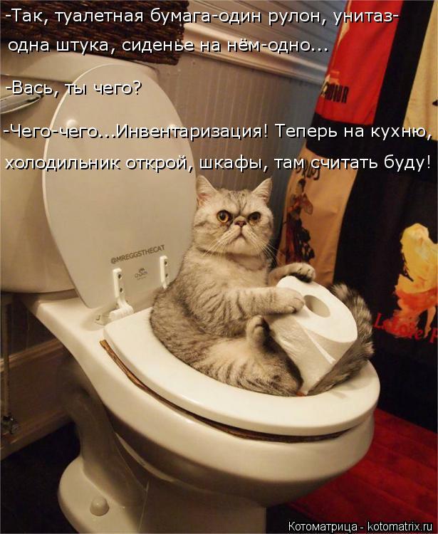 Котоматрица: -Так, туалетная бумага-один рулон, унитаз- одна штука, сиденье на нём-одно... -Вась, ты чего? -Чего-чего...Инвентаризация! Теперь на кухню, холоди
