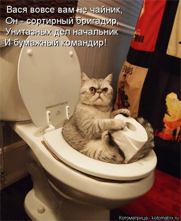 Котоматрица: Вася вовсе вам не чайник, Он - сортирный бригадир, Унитазных дел начальник И бумажный командир!