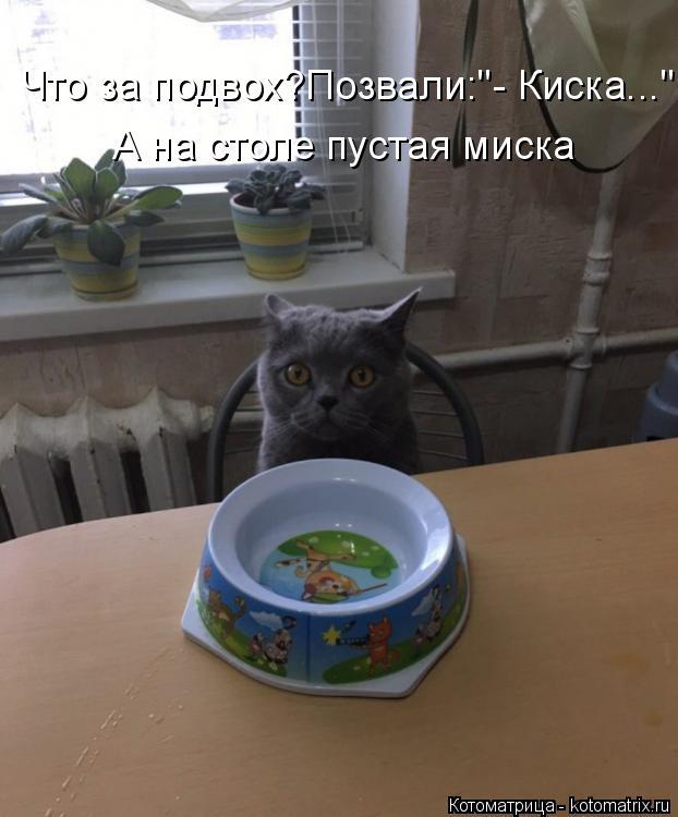 """Котоматрица: Что за подвох?Позвали:""""- Киска..."""" А на столе пустая миска"""