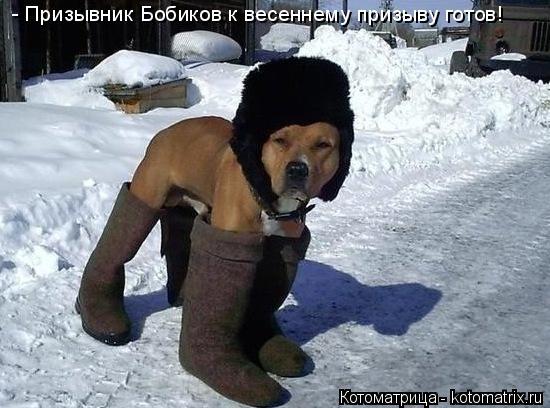 Котоматрица: - Призывник Бобиков к весеннему призыву готов!