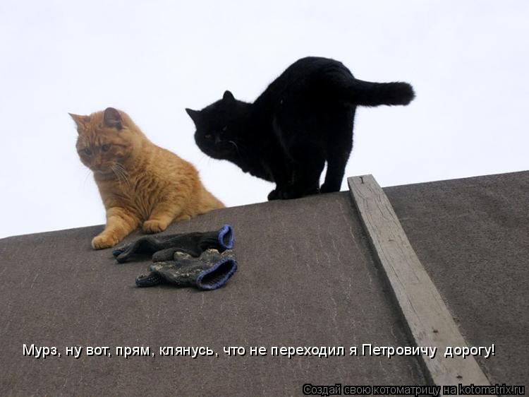Котоматрица: Мурз, ну вот, прям, клянусь, что не переходил я Петровичу  дорогу!