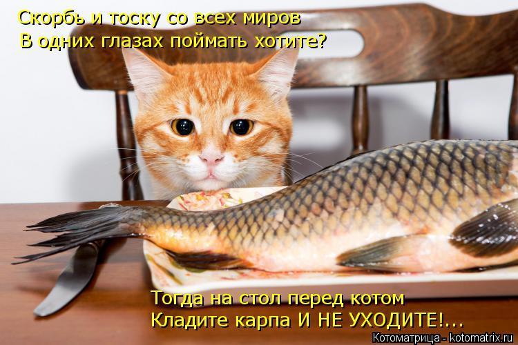 Котоматрица: Скорбь и тоску со всех миров В одних глазах поймать хотите? Тогда на стол перед котом Кладите карпа И НЕ УХОДИТЕ!...