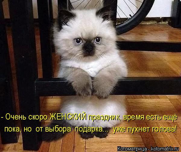 Котоматрица: - Очень скоро ЖЕНСКИЙ праздник, время есть ещё пока, но  от выбора  подарка...  уже пухнет голова!
