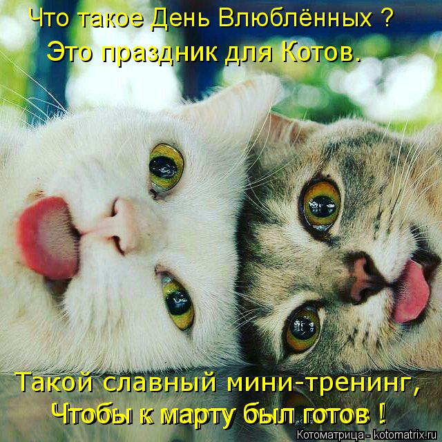 Котоматрица: Такой славный мини-тренинг, Что такое День Влюблённых ? Чтобы к марту был готов ! Чтобы к марту был готов ! Это праздник для Котов.