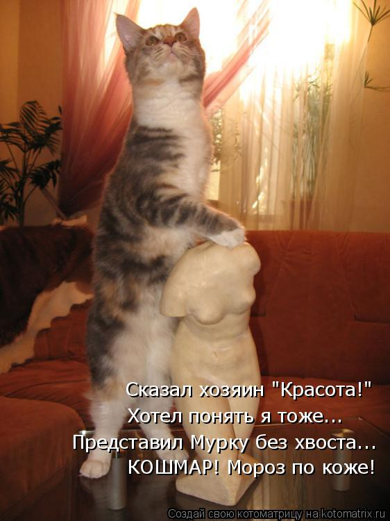 """Котоматрица: Сказал хозяин """"Красота!"""" Хотел понять я тоже... Представил Мурку без хвоста... КОШМАР! Мороз по коже!"""
