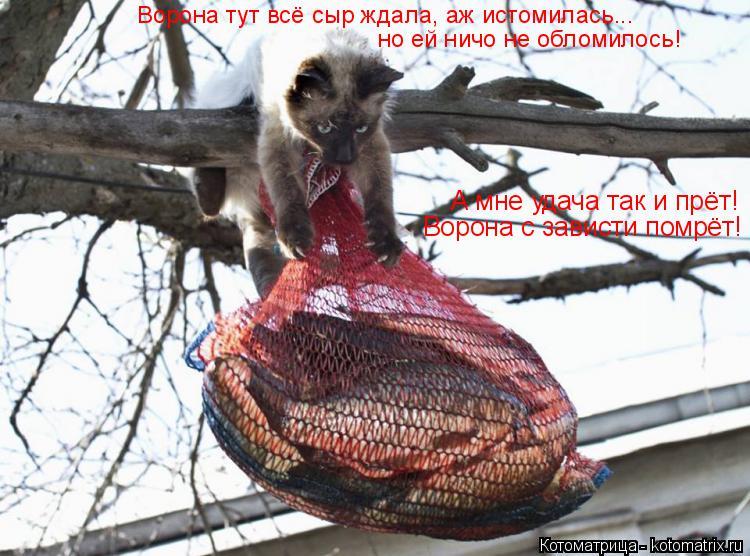 Котоматрица: Ворона тут всё сыр ждала, аж истомилась... но ей ничо не обломилось! А мне удача так и прёт! Ворона с зависти помрёт!