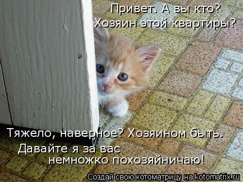 Котоматрица: Хозяин этой квартиры? Давайте я за вас  немножко похозяйничаю! Привет. А вы кто? Тяжело, наверное? Хозяином быть.