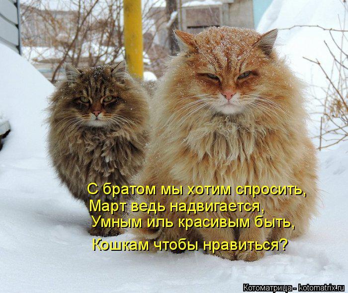 Котоматрица: Кошкам чтобы нравиться? Умным иль красивым быть, Март ведь надвигается, С братом мы хотим спросить,