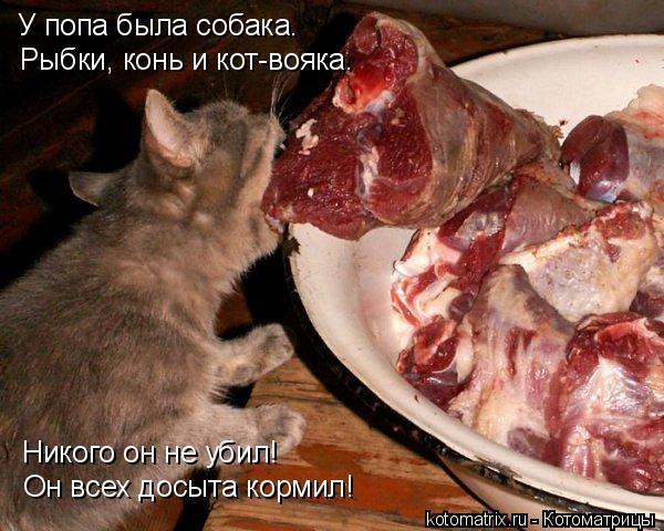 Котоматрица: У попа была собака. Рыбки, конь и кот-вояка. Никого он не убил! Он всех досыта кормил!