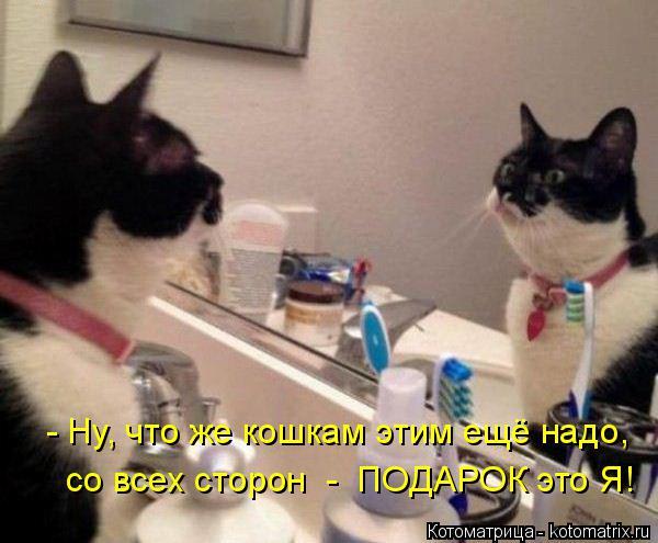 Котоматрица: - Ну, что же кошкам этим ещё надо, со всех сторон  -  ПОДАРОК это Я!