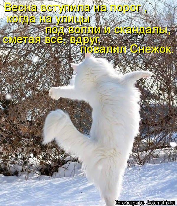 Котоматрица: Весна вступила на порог , под вопли и скандалы, сметая все, вдруг, повалил Снежок. когда на улицы