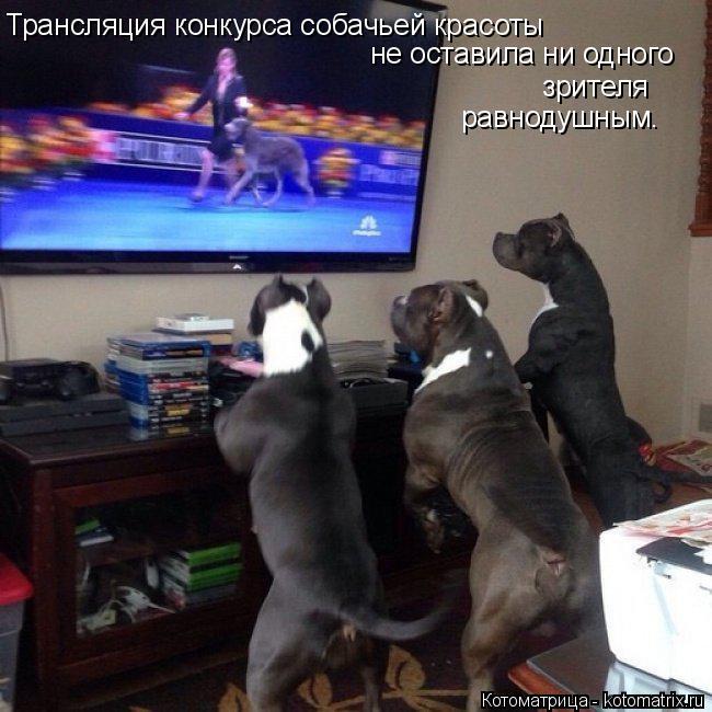 Котоматрица: Трансляция конкурса собачьей красоты  не оставила ни одного зрителя равнодушным.