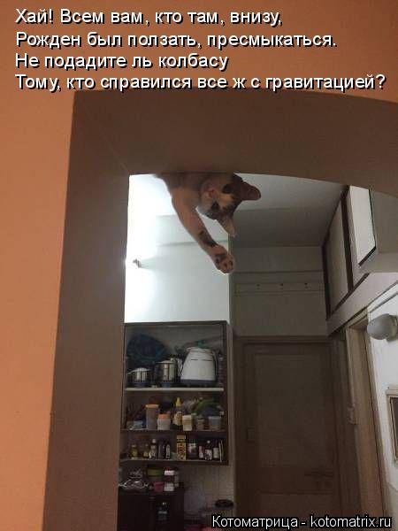 Котоматрица: Тому, кто справился все ж с гравитацией? Не подадите ль колбасу Рожден был ползать, пресмыкаться. Хай! Всем вам, кто там, внизу,