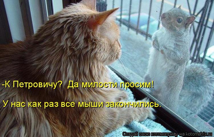 Котоматрица: -К Петровичу?  Да милости просим! У нас как раз все мыши закончились.