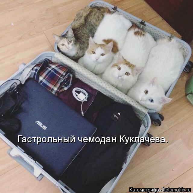 Котоматрица: Гастрольный чемодан Куклачева.