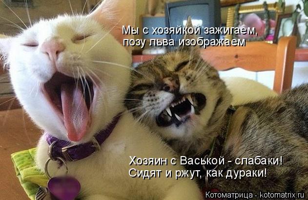 Котоматрица: Мы с хозяйкой зажигаем, позу льва изображаем Хозяин с Васькой - слабаки! Сидят и ржут, как дураки!