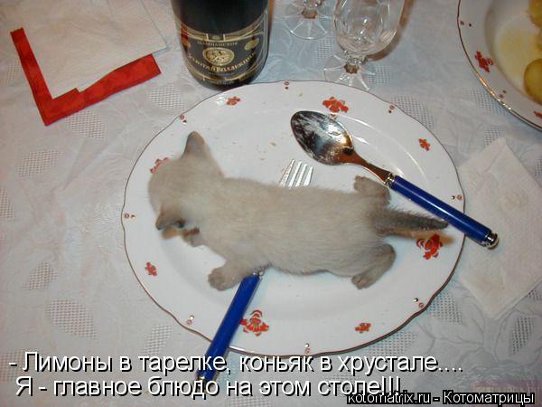 Котоматрица: - Лимоны в тарелке, коньяк в хрустале.... Я - главное блюдо на этом столе!!!