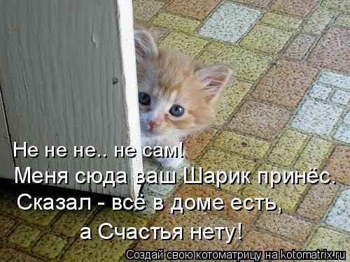 Котоматрица: Не не не.. не сам! Меня сюда ваш Шарик принёс. Сказал - всё в доме есть, а Счастья нету!