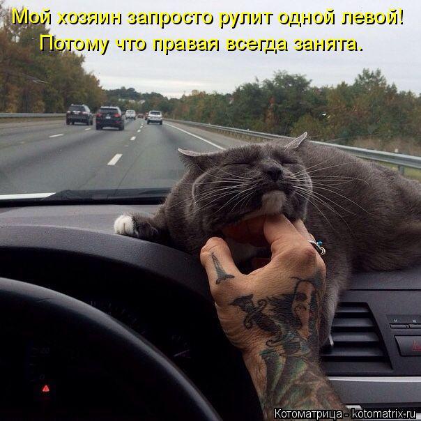 Котоматрица: Мой хозяин запросто рулит одной левой! Потому что правая всегда занята.