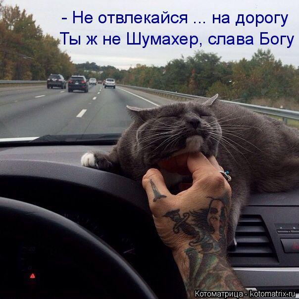 Котоматрица: Ты ж не Шумахер, слава Богу - Не отвлекайся ... на дорогу