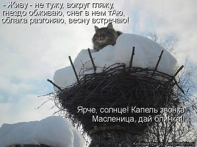 Котоматрица: - Живу - не тужу, вокруг гляжу, гнездо обживаю, снег в нем тАю, облака разгоняю, весну встречаю! Ярче, солнце! Капель звонка!  Масленица, дай бли