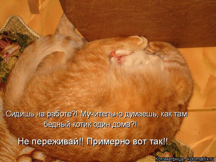 Котоматрица: Сидишь на работе?! Мучительно думаешь, как там  бедный котик один дома?! Не переживай!! Примерно вот так!!