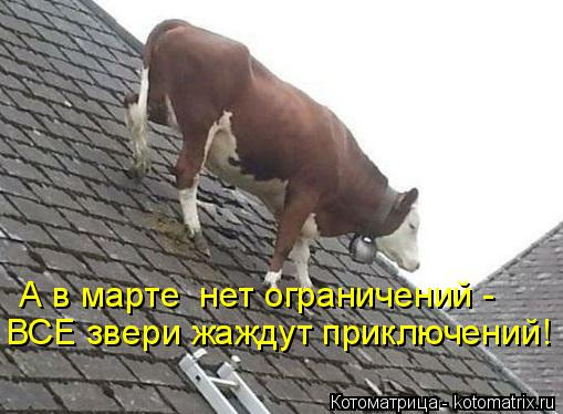 Котоматрица: А в марте  нет ограничений - ВСЕ звери жаждут приключений!