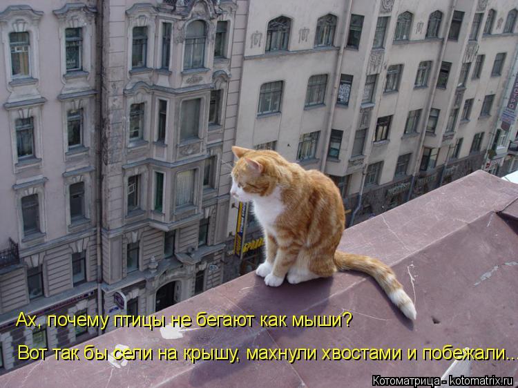 Котоматрица: Ах, почему птицы не бегают как мыши?  Вот так бы сели на крышу, махнули хвостами и побежали...