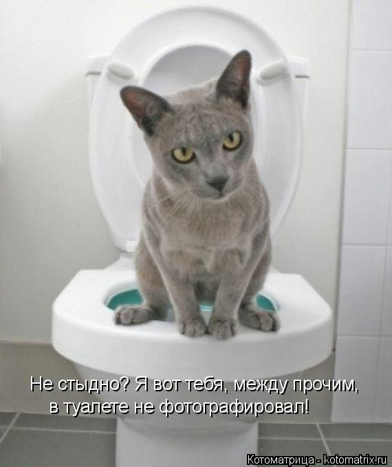 Котоматрица: Не стыдно? Я вот тебя, между прочим, в туалете не фотографировал!