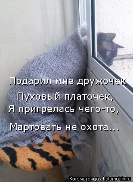 Котоматрица: Подарил мне дружочек  Пуховый платочек, Я пригрелась чего-то, Мартовать не охота...