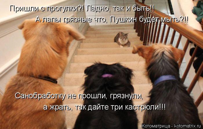 Котоматрица: Пришли с прогулки?! Ладно, так и быть!! А лапы грязные что, Пушкин будет мыть?!! Санобработку не прошли, грязнули, а жрать, так дайте три кастрюл