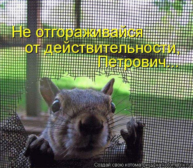 Котоматрица: Петрович... от действительности, Не отгораживайся
