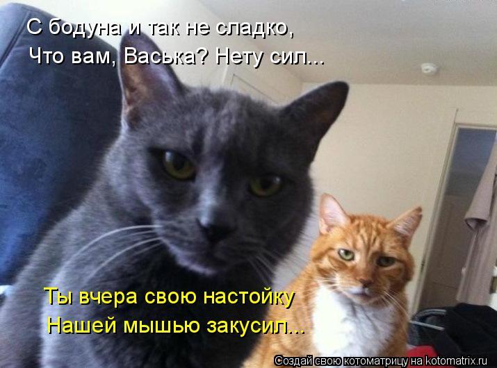 Котоматрица: С бодуна и так не сладко, Что вам, Васька? Нету сил... Ты вчера свою настойку Нашей мышью закусил...