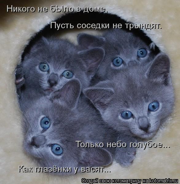 Котоматрица: Никого не бЫло в доме, Пусть соседки не трындят. Только небо голубое...  Как глазёнки у васят...