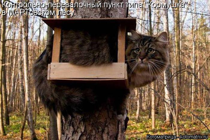 """Котоматрица: Контрольно-перевалочный пункт типа """"Кормушка"""" в МАРТовском лесу."""