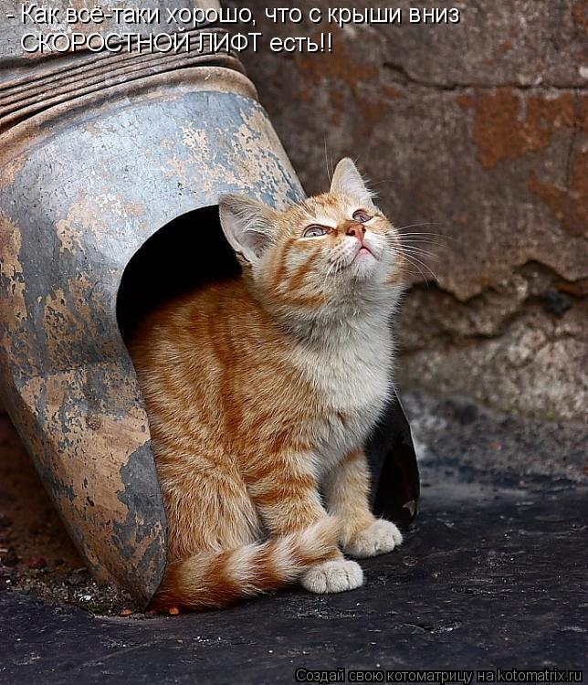 Котоматрица: - Как всё-таки хорошо, что с крыши вниз  СКОРОСТНОЙ ЛИФТ есть!!