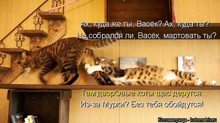 Котоматрица: Ах, куда же ты, Васёк? Ах, куда ты? Не собрался ли, Васёк, мартовать ты? Там дворОвые коты щас дерутся... Из-за Мурки? Без тебя обойдутся!