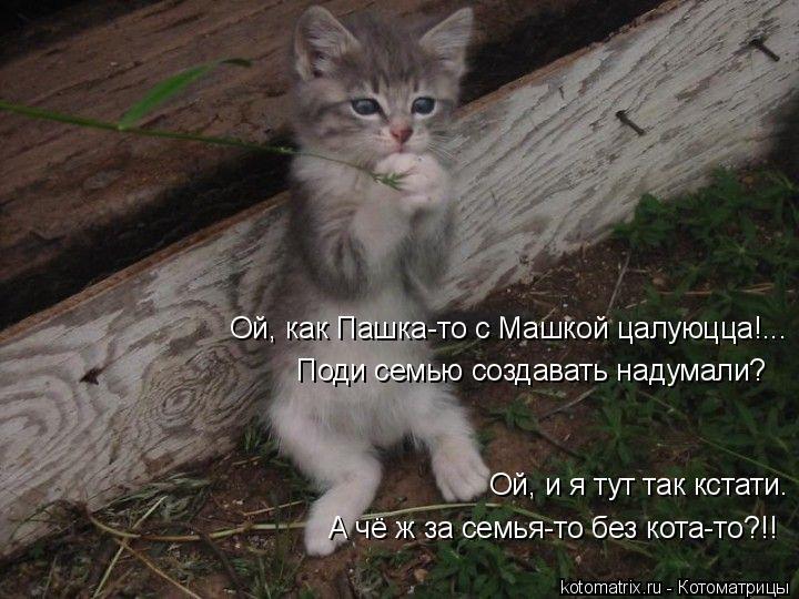 Котоматрица: Ой, как Пашка-то с Машкой цалуюцца!... Поди семью создавать надумали? А чё ж за семья-то без кота-то?!! Ой, и я тут так кстати.