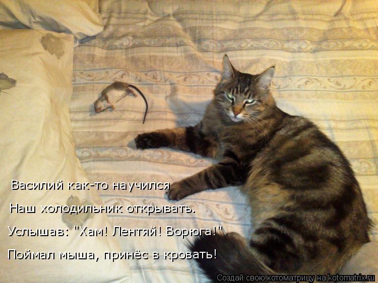 http://kotomatrix.ru/images/lolz/2017/02/23/kotomatritsa_r-.jpg