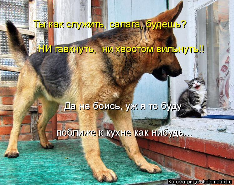 Котоматрица: Ты как служить, салага, будешь? НИ гавкнуть,  ни хвостом вильнуть!!  Да не боись, уж я то буду   поближе к кухне как нибудь...