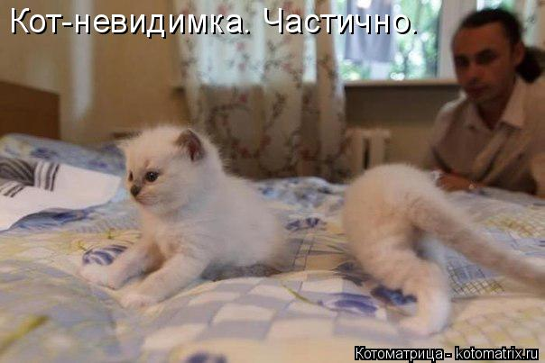 Котоматрица: Кот-невидимка. Частично.