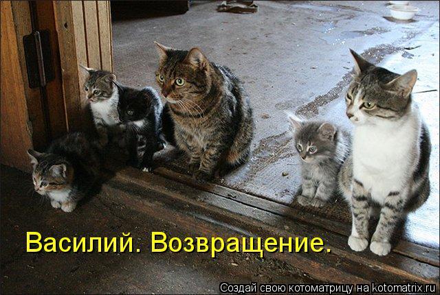 Котоматрица: Василий. Возвращение.